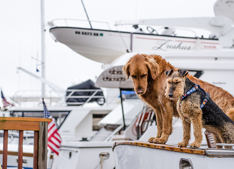 hunde på båd